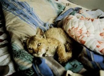 a+very+sick+cub