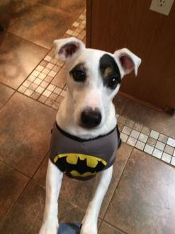 batman-riley