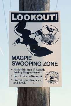 Magpie2
