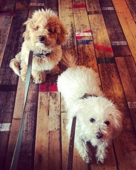 izzy's dogs